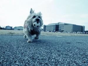 迷サッカー犬